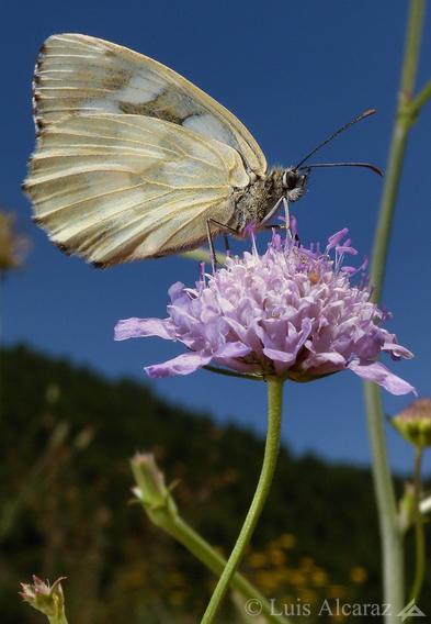 http://www.luis-alcaraz.es/files/gimgs/13_-luis-alcaraz----naturaleza-y-macro10.jpg