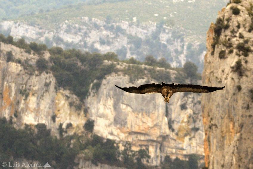 http://www.luis-alcaraz.es/files/gimgs/13_-luis-alcaraz----naturaleza-y-macro18.jpg
