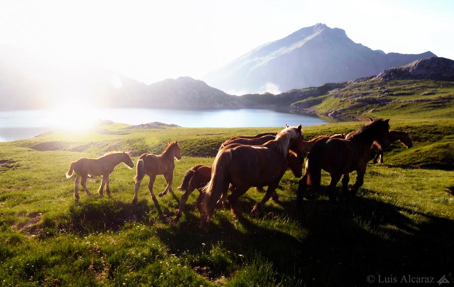 http://www.luis-alcaraz.es/files/gimgs/13_-luis-alcaraz----naturaleza-y-macro19.jpg